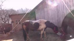 Влажная русская зоофилка сосет коню крупную шишку видео оральное зоо