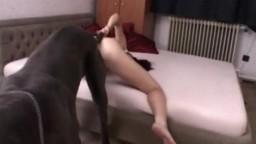 Большой собачара ебет похотливую зоофилку в изящную писечку zoo porn video глядеть онлайн
